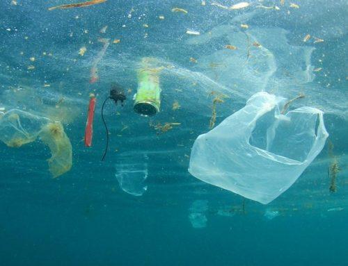 (Соопштение за печат) Забрана на пластичните кеси од 2021 година: уште едно неисполнето ветување на Министерството за животна средина